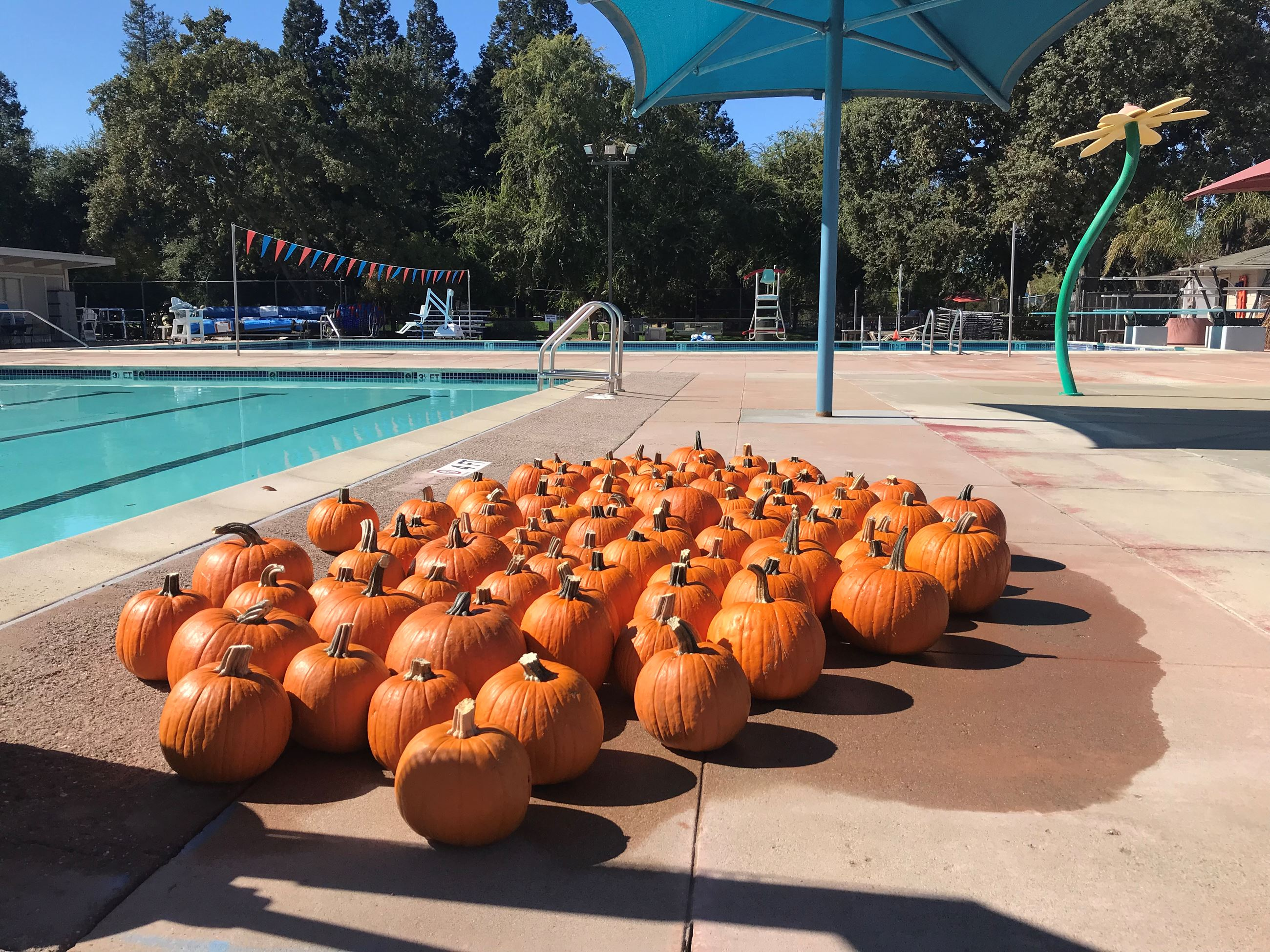 Pumpkins on the side of the pool