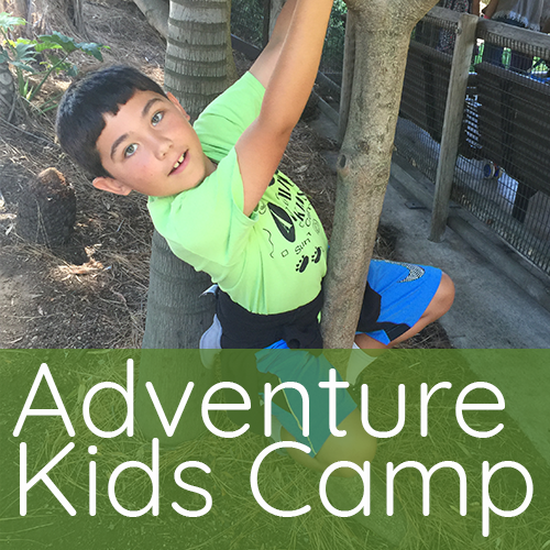 2019 adventure kids summer camp pleasant hill recreation park ca for Gregory gardens elementary school